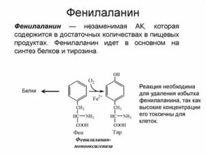 Фенилаланин - характеристики, состав, применение, рецепты, польза и вред