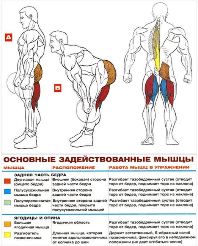 Фронтальные приседания, присед со штангой: варианты и техника выполнения | rulebody.ru — правила тела