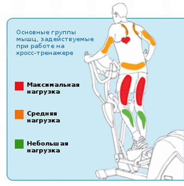 Тренажер велосипед - какие мышцы тренирует, занятия и виды велотренажера