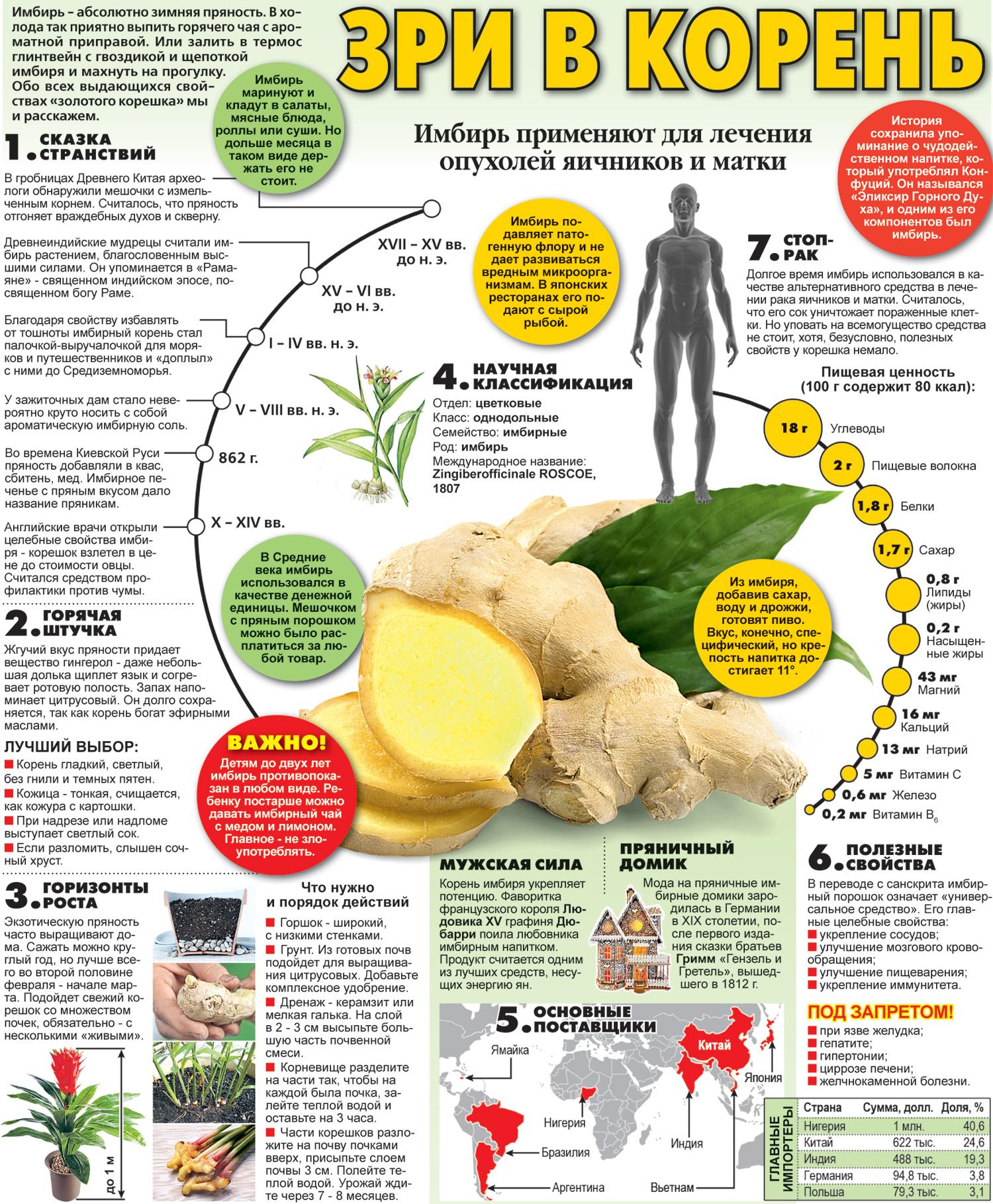 Корень имбиря: полезные свойства и противопоказания, лечебные свойства и вред