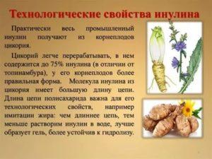 Польза и вред растворимого цикория для мужского и женского организма.