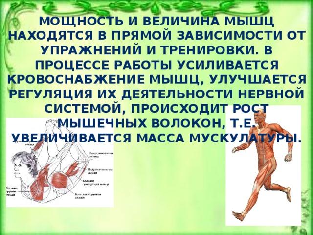 Суть роста мышц.