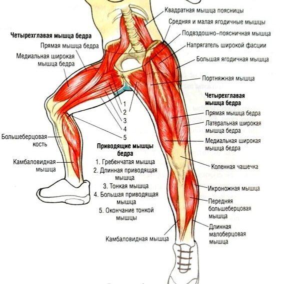 Какие мышцы работают при приседании: техника, советы тренеров