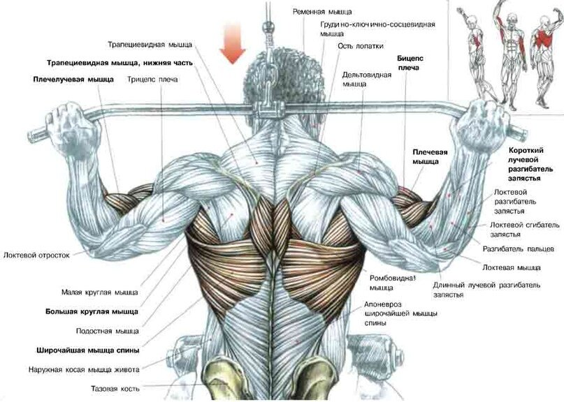 Топ-10 упражнений для спины в домашних условиях для мужчин