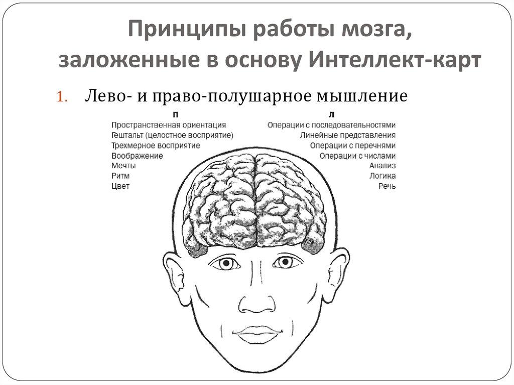 Связь мышц с мозгом – o sporte