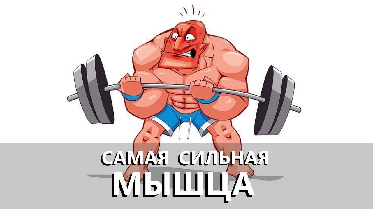 Какие мышцы у человека самые активные