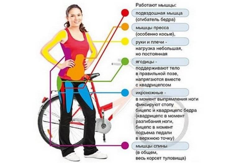 Польза велотренажера для похудения для женщин и мужчин