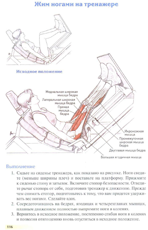 Жим ногами лежа на тренажере. секреты больших ног.