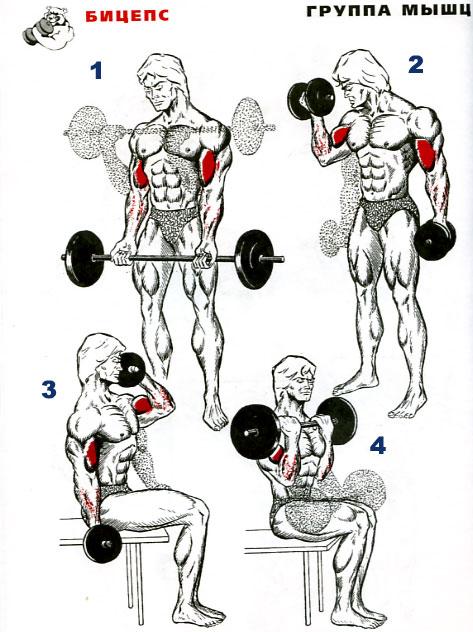 Как качать мышцы со стопроцентной эффективностью