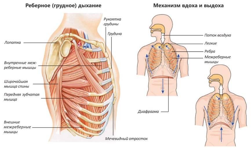 Правильное дыхание диафрагмой —как научиться правильно дышать?