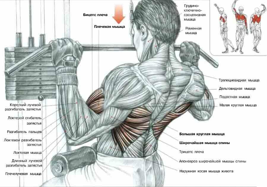 Как сделать плечи шире: хитрости и упражнения