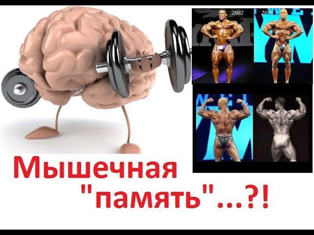 Cуществует ли мышечная память?