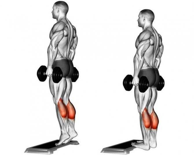 Подъемы на носки стоя — главное упражнение для развития голеней