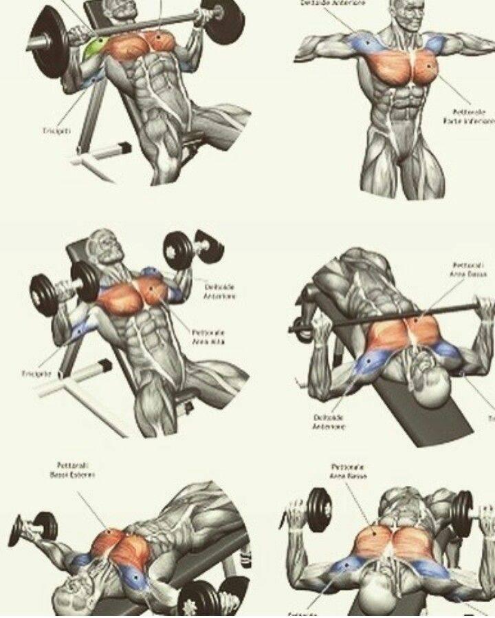 Верхние грудные мышцы: как накачать дома/зале? 10 упражнений для груди (фото + видео)