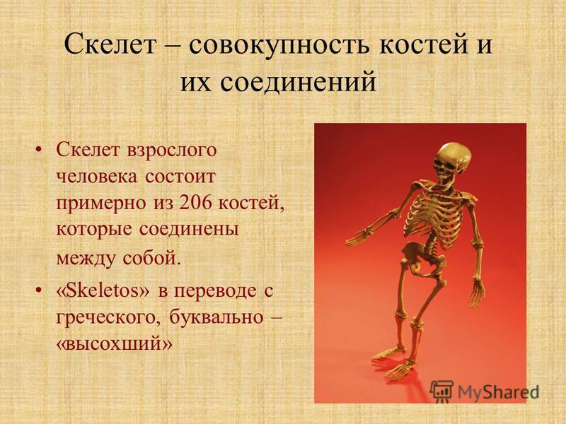 Какой вес костей человека?