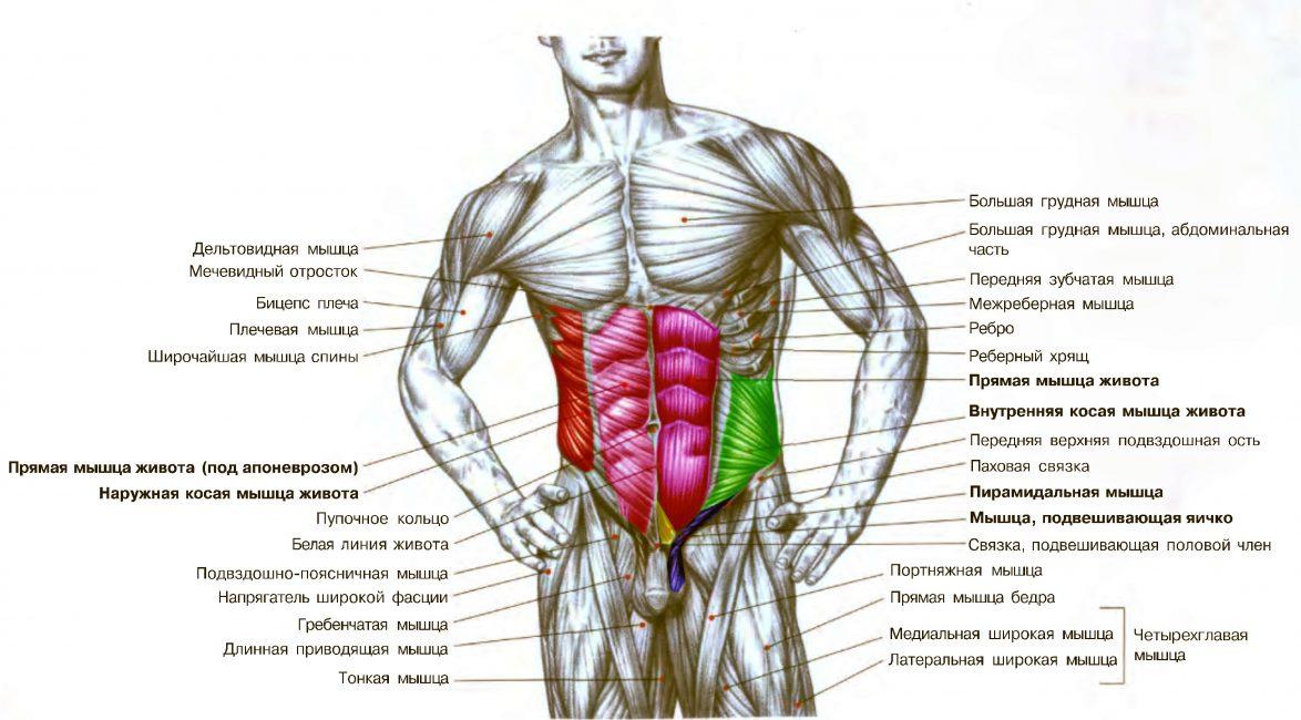 Эффективные упражнения на косые мышцы живота