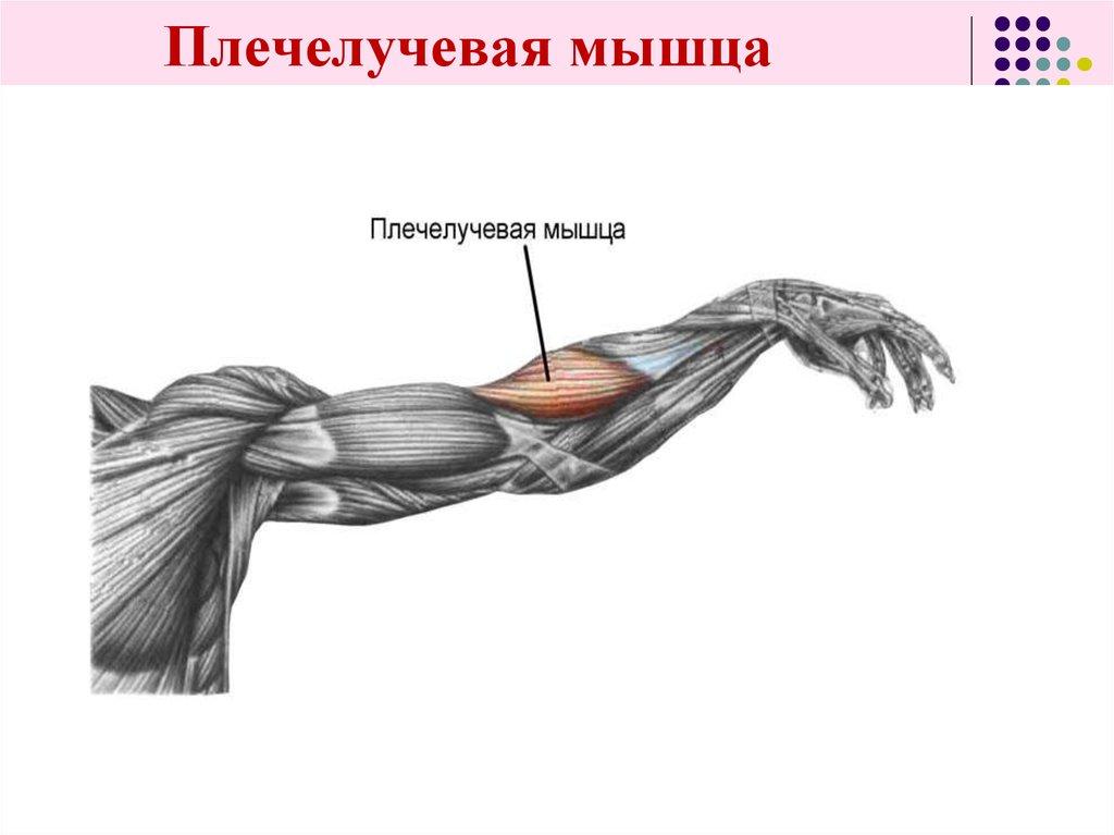 Тренировка рук на массу: базовые упражнения для больших рук