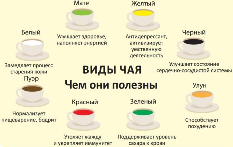 Зеленый чай: полезные свойства, противопоказания, понижает или повышает давление