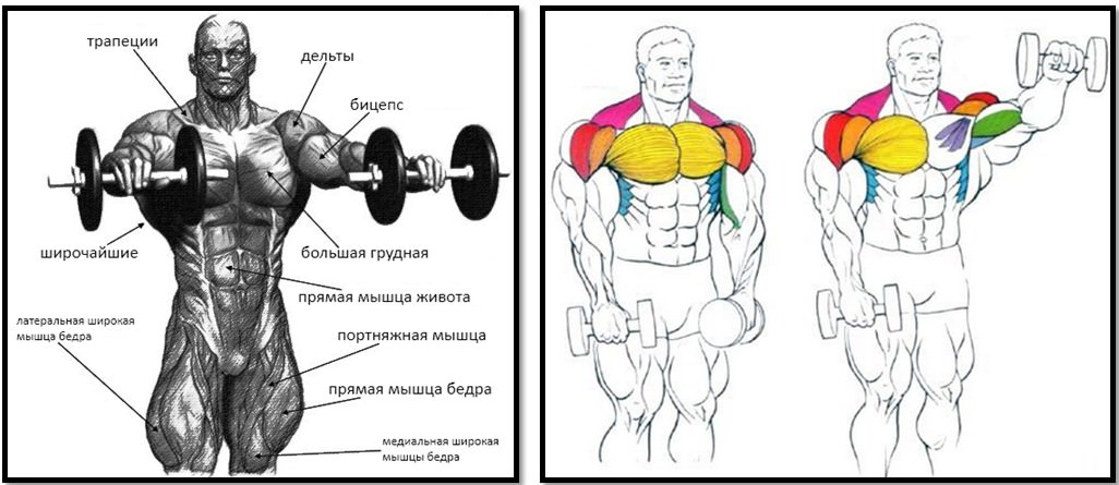 Подъем гантелей в стороны: правильная техника и основные варианты выполнения упражнения (105 фото и видео)