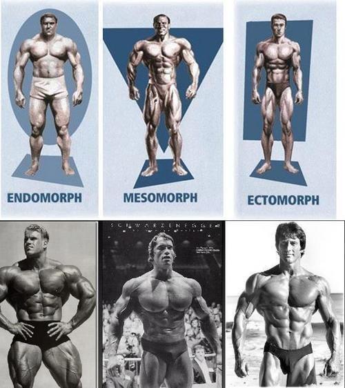 Нормостенический тип телосложения или мезоморф