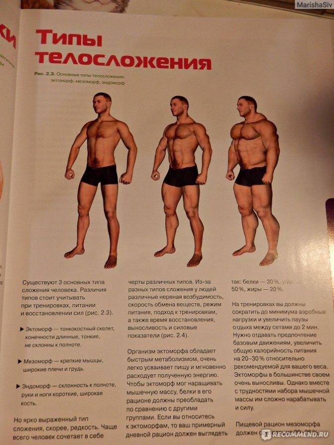 Виды телосложения у мужчин: определение, названия и характеристики с фото - tony.ru
