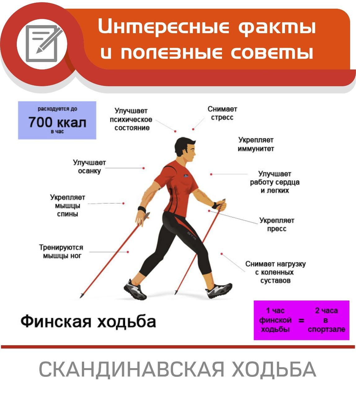 Скандинавская ходьба с палками для похудения, польза и вред техники   доктор борменталь