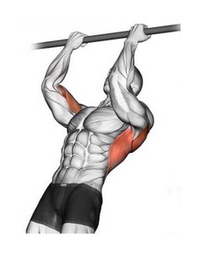 Подтягивание узким хватом— какие мышцы при этом работают?