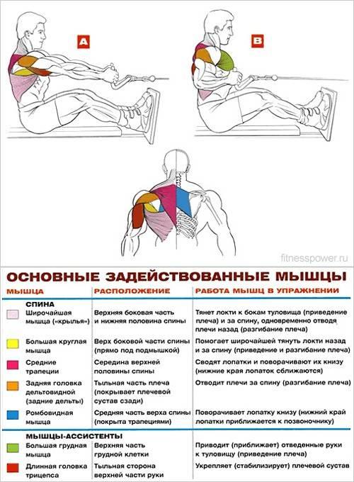 Комплекс упражнений, чтобы укрепить мышцы спины в домашних условиях