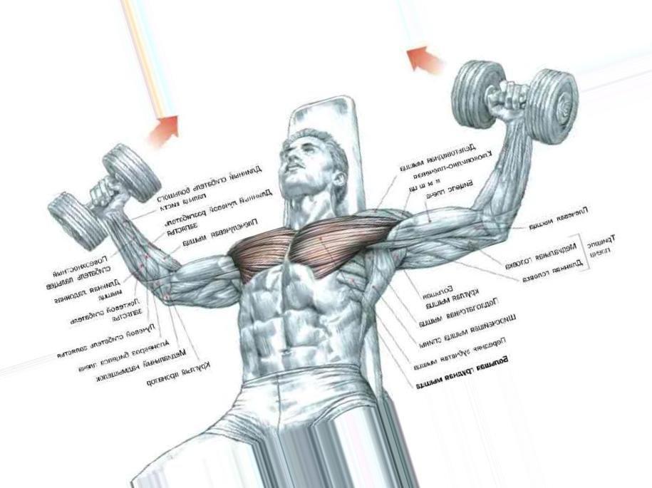 Тренируем нижнюю часть груди— целевые упражнения