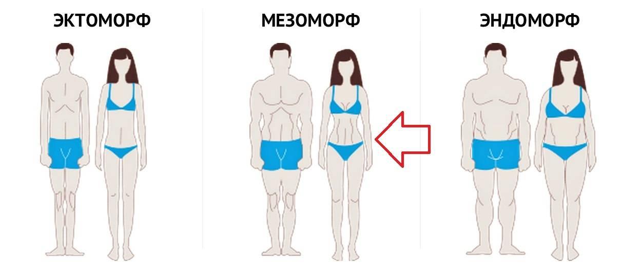 Эктоморф, мезоморф, эндоморф – типы телосложения (соматотипы по шелдону)  |  krok8.com - фундаментальная стратегия развития