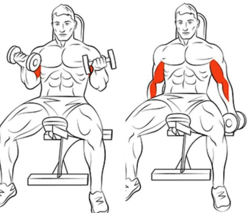Топ 10 лучших упражнений на трицепс в тренажерном зале для мужчин