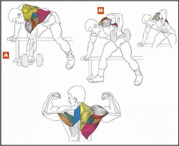 Как накачать себе спину дома не хуже чем в спортзале! руководство тренинга в домашних условиях