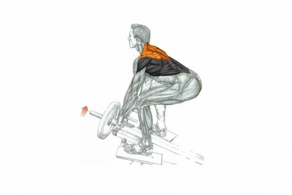Варианты выполнения тяги штанги в наклоне, разбор основных ошибок