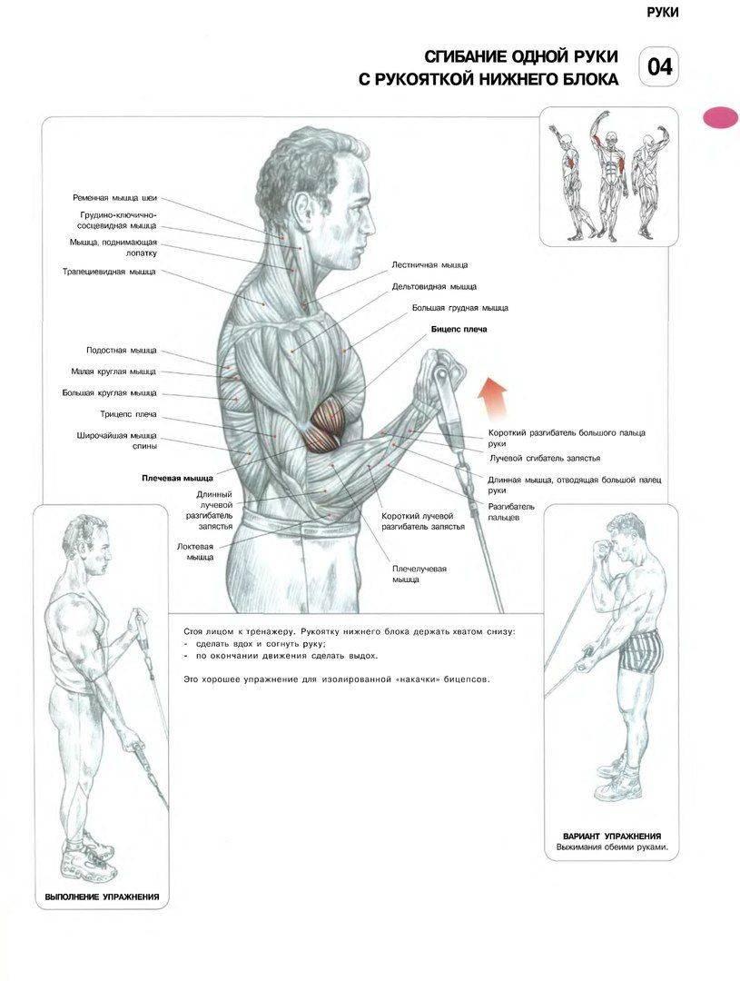 Топ-20 упражнений для рук в домашних условиях (фото)