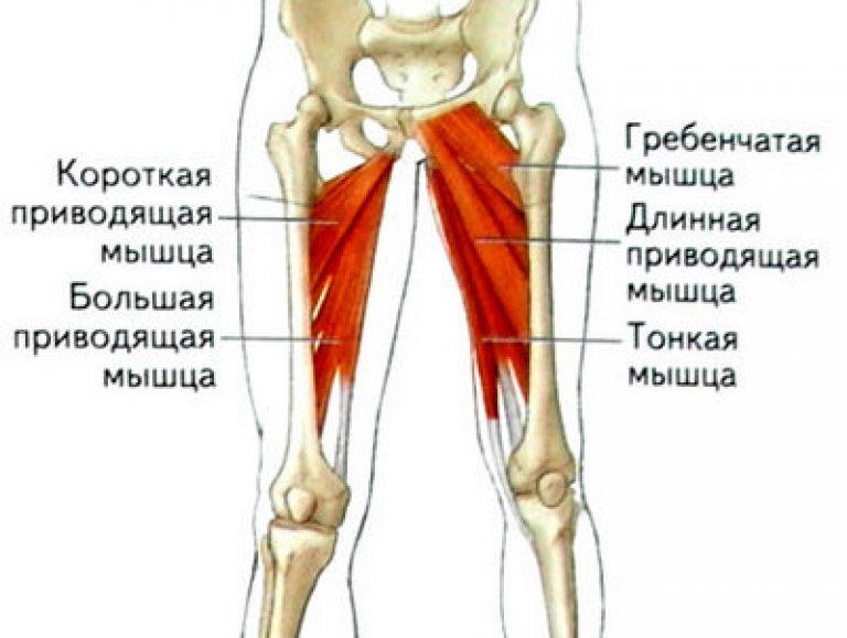 Упражнения для внутренней поверхности бедра женщинам и мужчинам