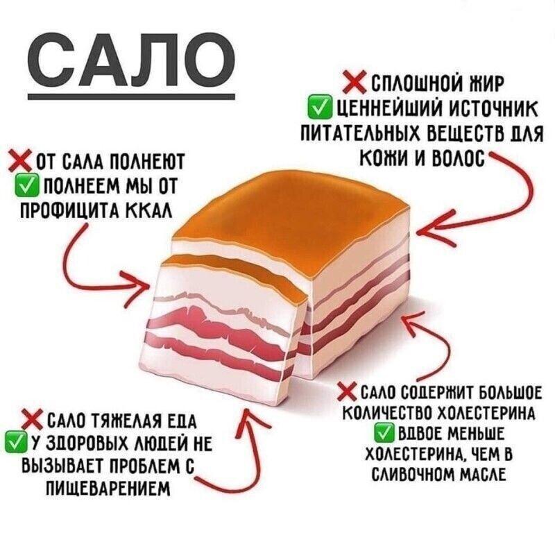 Польза и вред сала для организма, калорийность, состав, рецепт с фото
