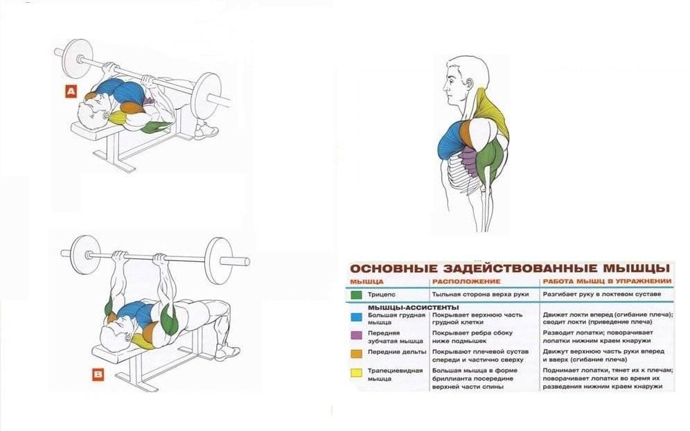 Жим свенда: техника выполнения+ разновидности упражнения