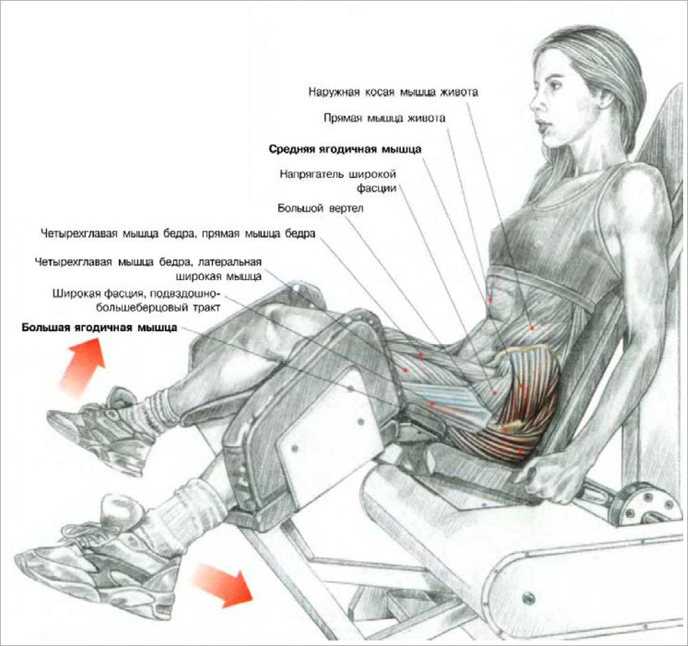 Отведение ноги назад в тренажере: вариации упражнения стоя и в упоре