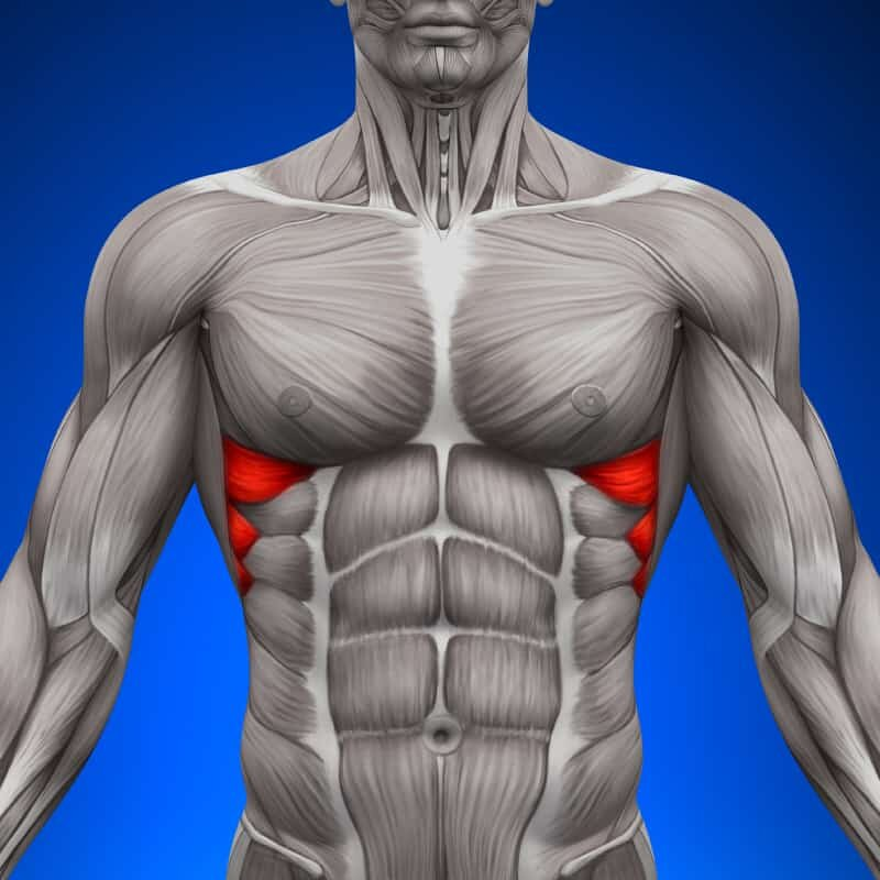 Как накачать нижнюю часть грудных мышц: рекомендации и упражнения