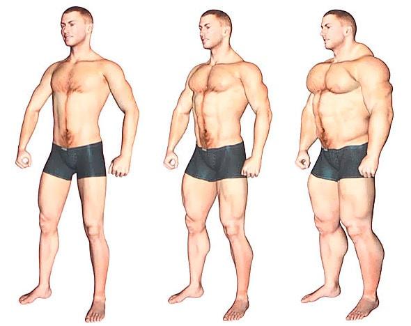 Типы мужского телосложения: советы по развитию