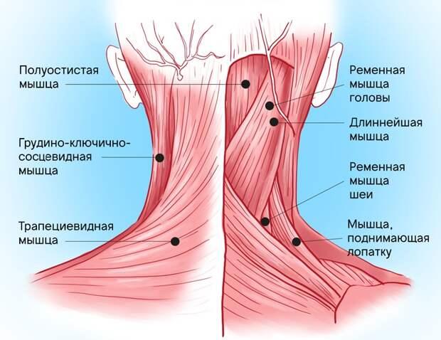 Болит затылок головы и шея: причины, что делать, диагностика, лечение, профилактика