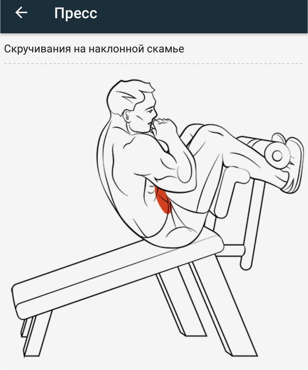 Сгибание рук на скамье скотта: техника выполнения, ошибки