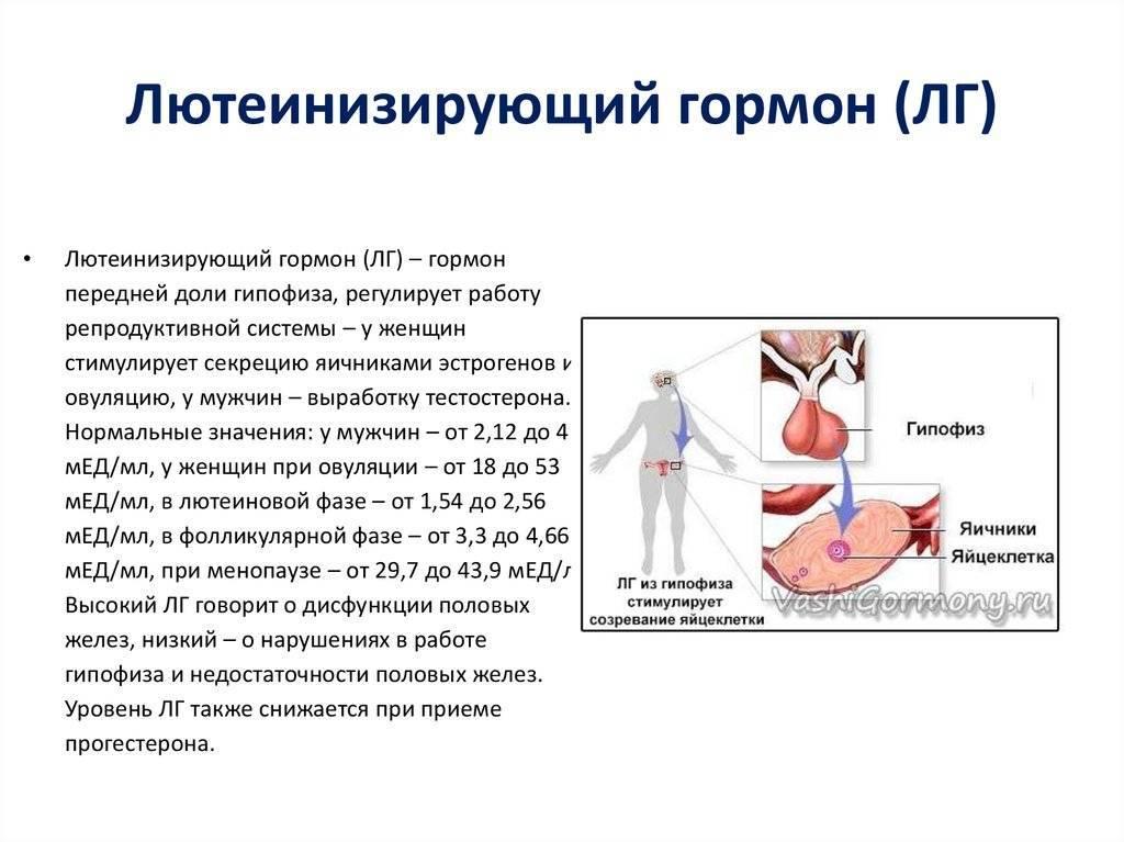 Повышенный пролактин у женщин: причины и последствия, лечение