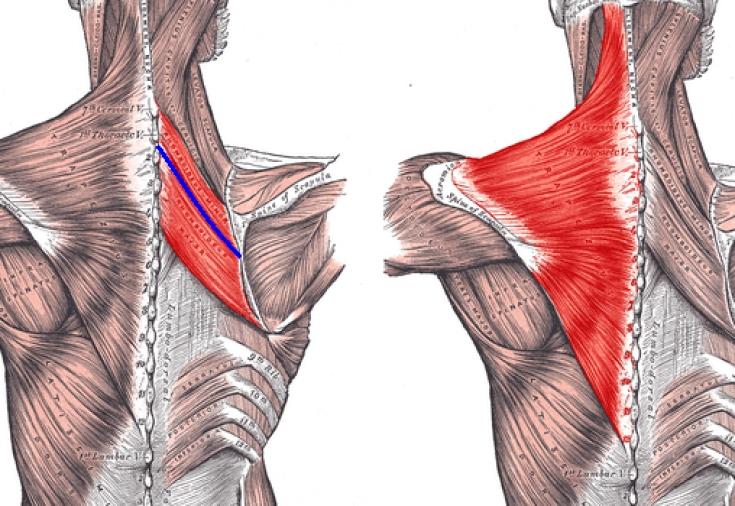 Упражнения для растяжки спины и позвоночника | самое главное