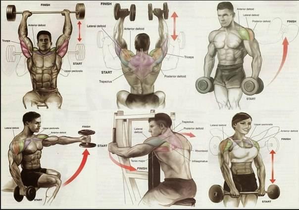 5 тренировочных программ на плечи: руководство для среднего уровня. • bodybuilding & fitness