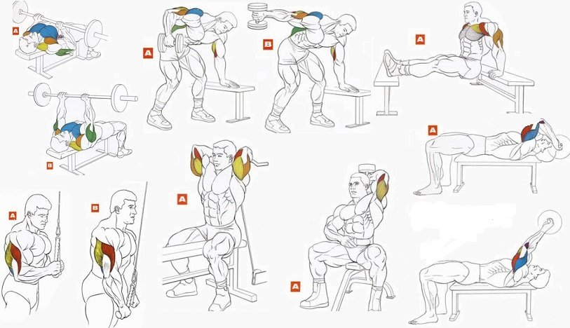 Топ упражнений для трицепсов женщинам в домашних условиях.