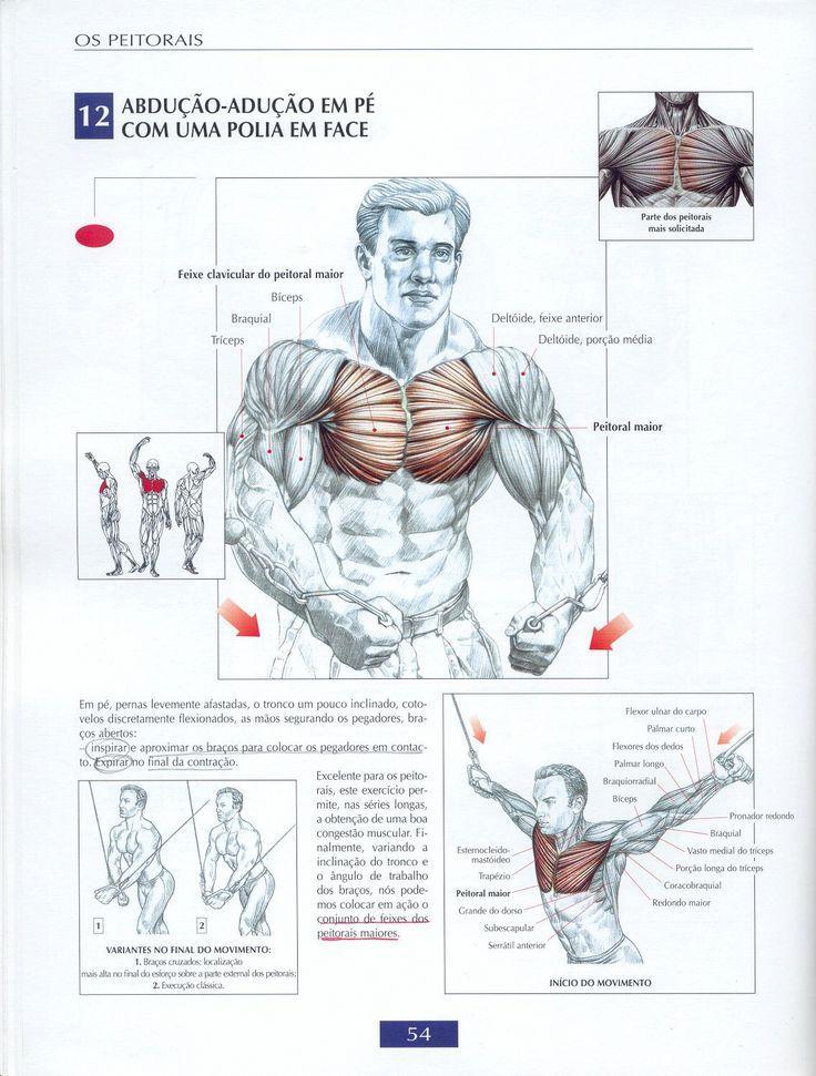 Как накачать внутреннюю часть грудных мышц: топ-7 упражнений и подробное видео   бомба тело
