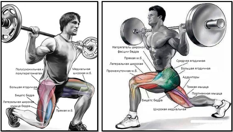 Фронтальные приседания со штангой: техника выполнения, работающие мышцы, польза