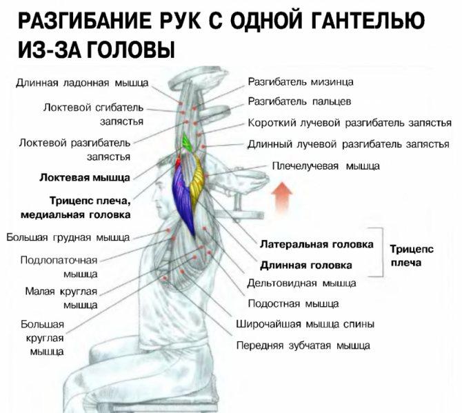 Как сделать рельефное тело за 2 недели: тренировки и питания для быстрого жиросжигания и создаяния рельефа мышц для мужчин и девушек