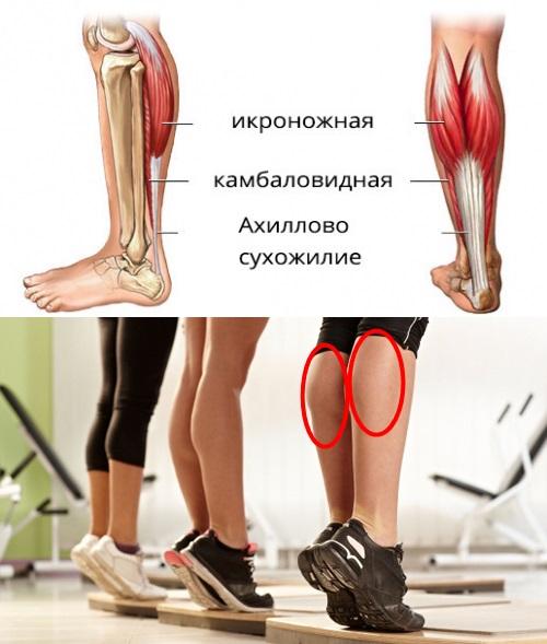 Упражнения на икры ног - 3 лучших способа прокачать икроножные мышцы